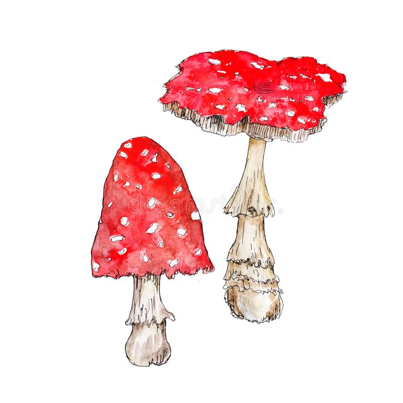 Free Watercolor Hand Drawn Artistic Colorful MUSHROOMS Fall  Season Vintage Isolated Icon Royalty Free Stock Images - 159842319