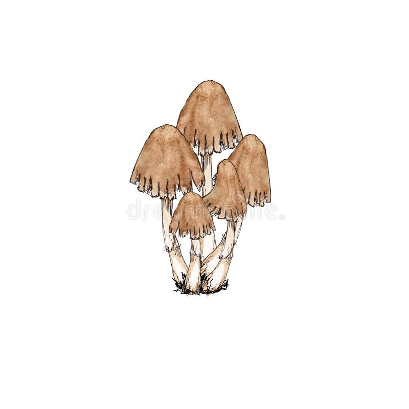 Free Watercolor Hand Drawn Artistic Colorful MUSHROOMS Fall  Season Vintage Isolated Icon Royalty Free Stock Image - 159842366