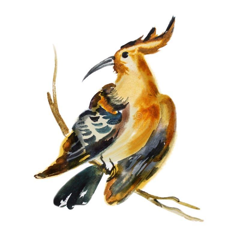 Watercolor hand drawn artistic illustration of tropical bird royalty free illustration