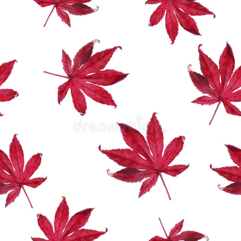 Watercolor hand drawn autumn leaf isolated seamless pattern. Seamless autumn pattern with autumn leaf maple. Hand drawn watercolor illustration royalty free stock photography
