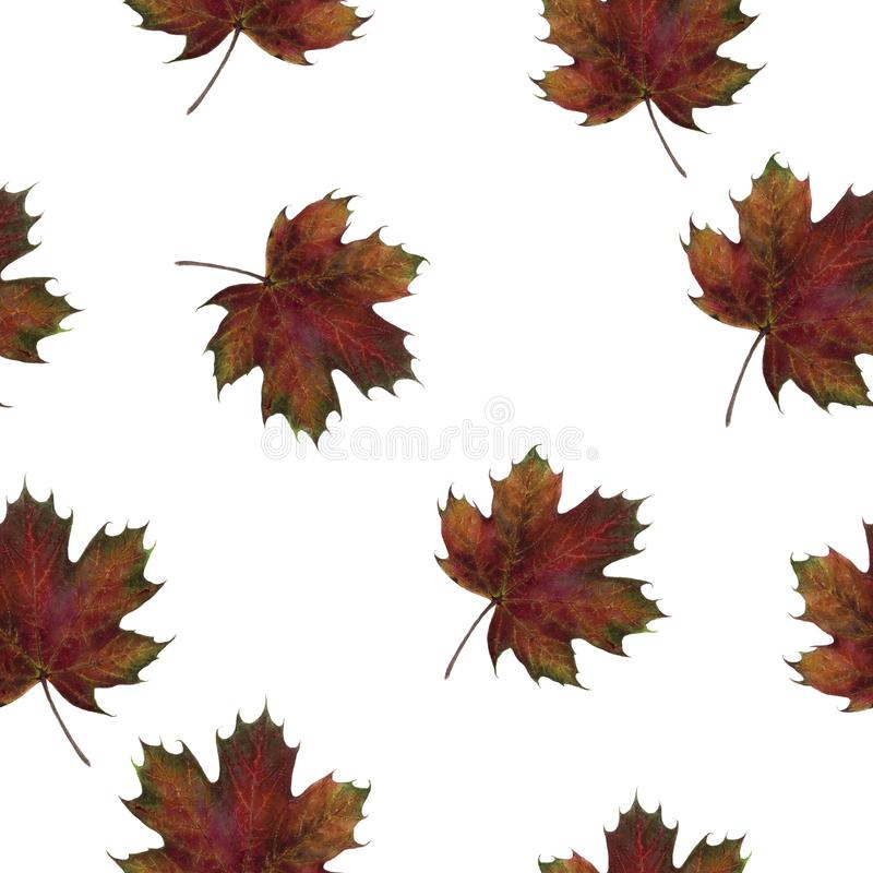Watercolor hand drawn autumn leaf isolated seamless pattern. Seamless autumn pattern with autumn leaf maple. Hand drawn watercolor illustration royalty free stock photos