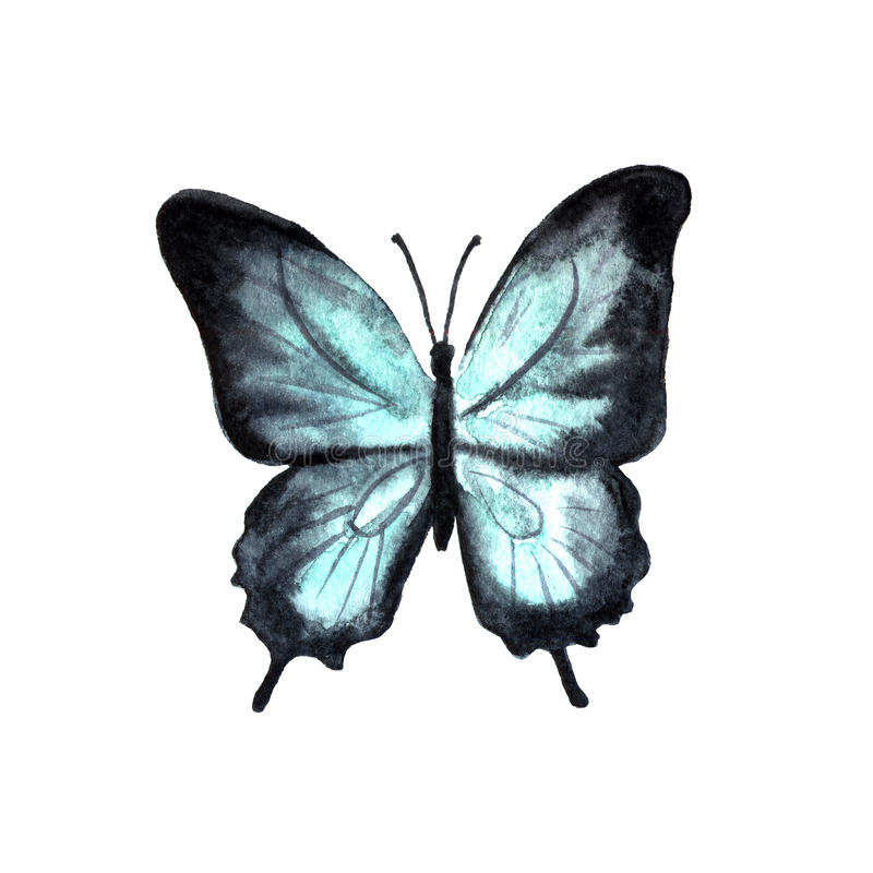 Watercolor hand drawn butterfly stock illustration