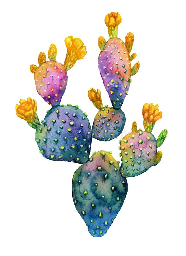 Watercolor hand drawn cactus. Blooming opuntia. royalty free illustration