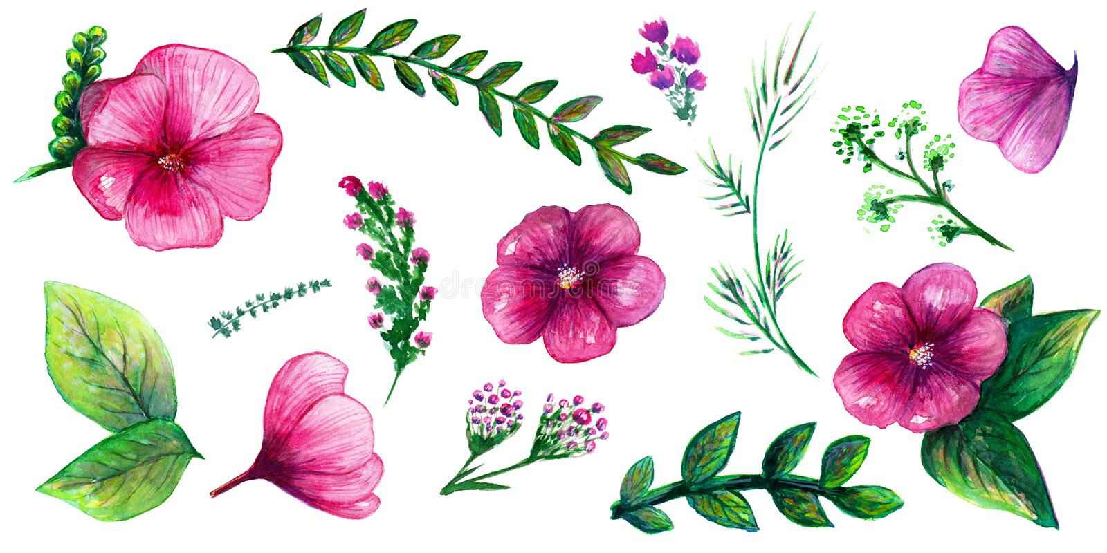 Watercolor hand drawn collection including 14 pink flowers, green and gold leafs and botanical elements on the white background. royalty free illustration