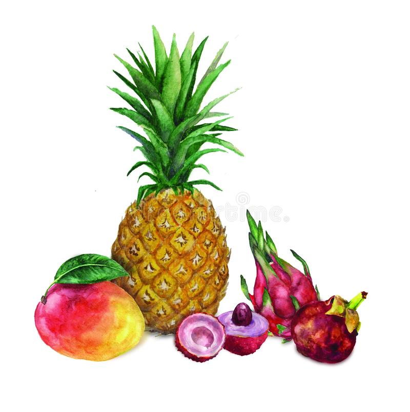 Clip art, Watercolor composition with exotic tropical fruits stock illustration