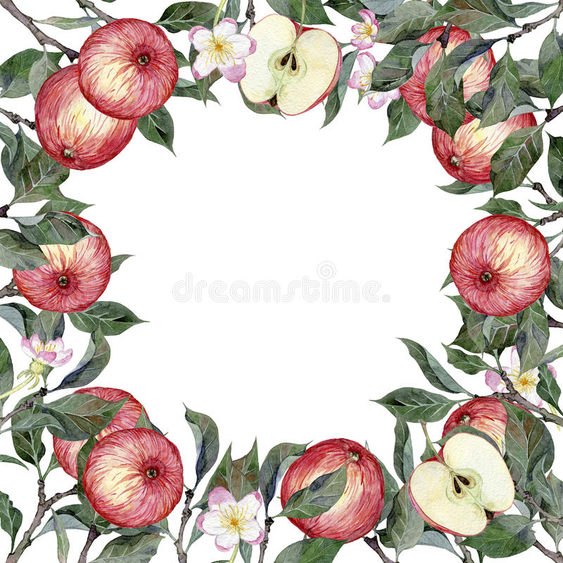 Watercolor hand drawn illustration of apples, branches and flowers royalty free illustration