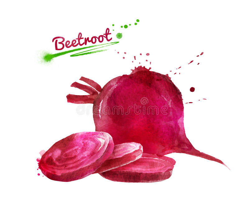 Watercolor hand drawn illustration of beetroot. Whole and sliced with paint smudges and splashes vector illustration