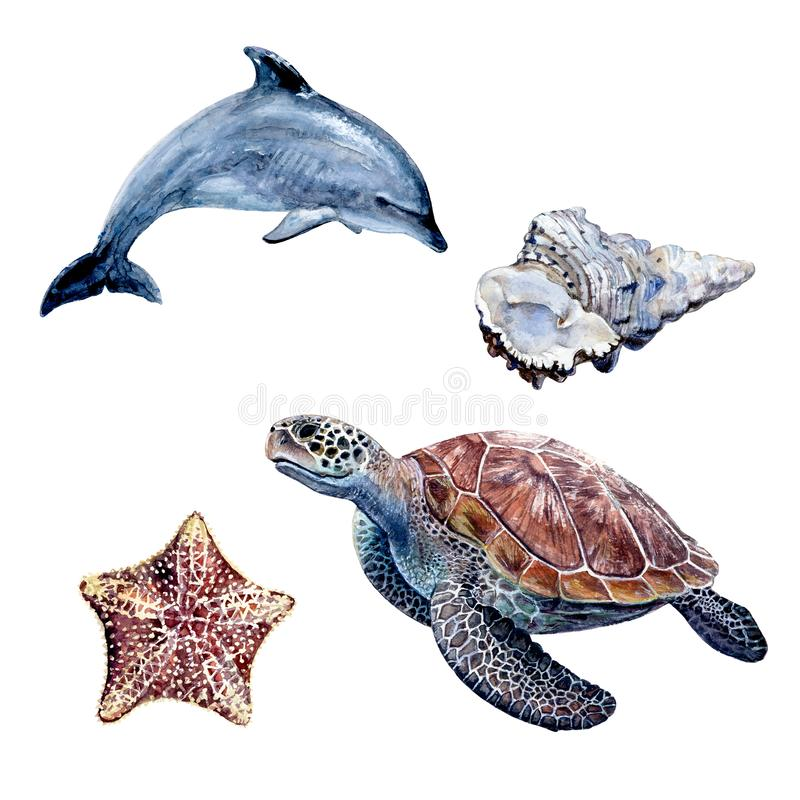 Watercolor hand drawn illustration dolphin, sea turtle, minke whale. royalty free illustration