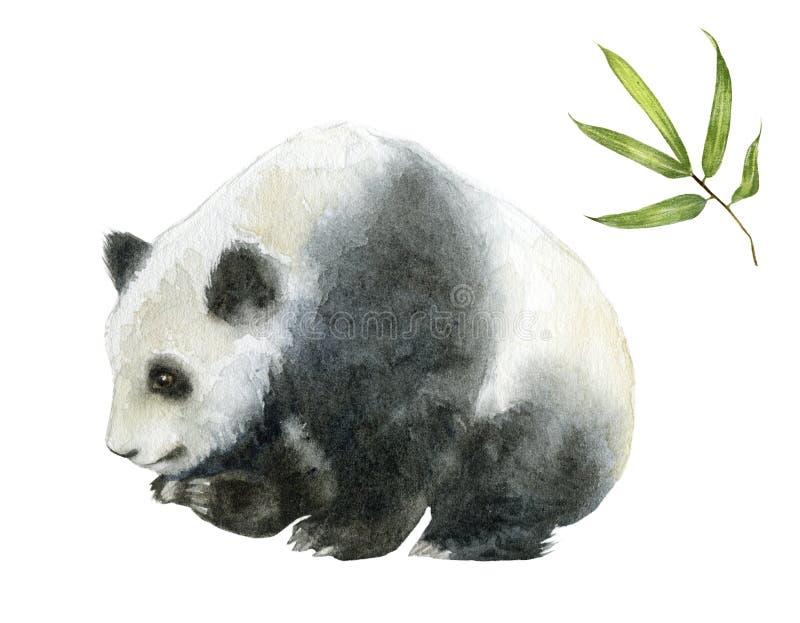 Panda bear watercolor hand draw illustration isolated on white background. royalty free illustration