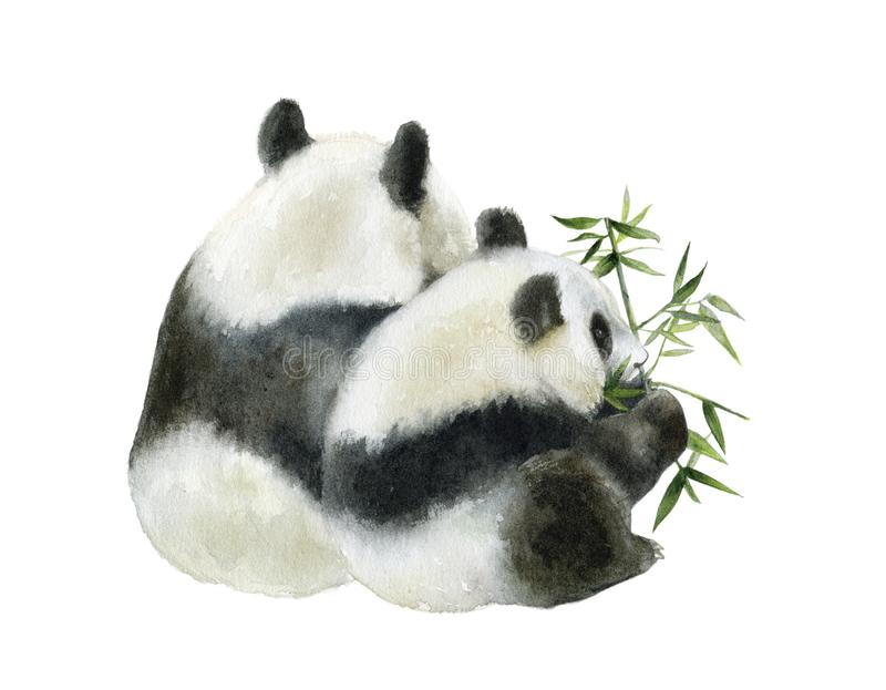Panda bear watercolor hand draw illustration isolated on white background. stock illustration
