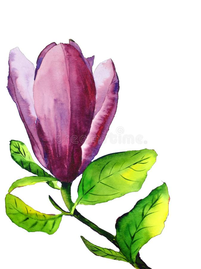 Watercolor hand-drawn magnolia flower with pink flower and green leaves isolated on white background stock illustration