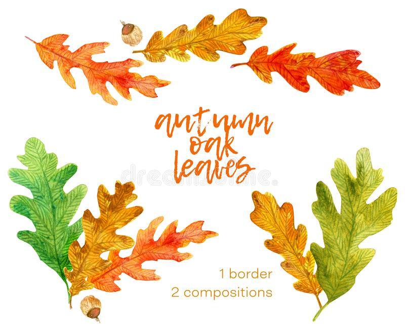 Set of hand drawn watercolor autumn oak leaves elements stock illustration