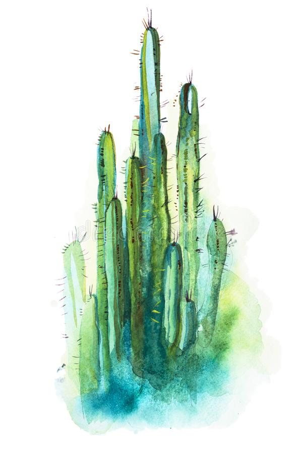 Free Watercolor Hand Drawn Spiky Cactus Isolated On White Stock Photos - 118074783