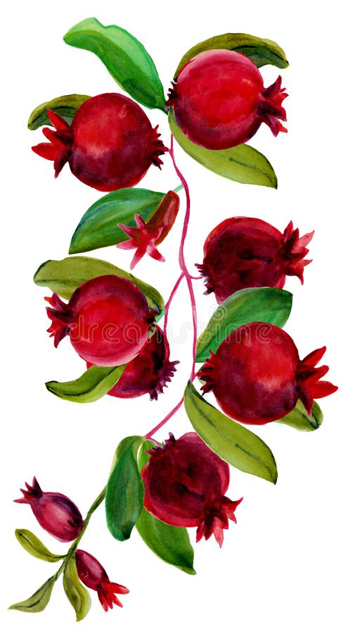 Watercolor vertical composition of branch with pomegranate royalty free stock images