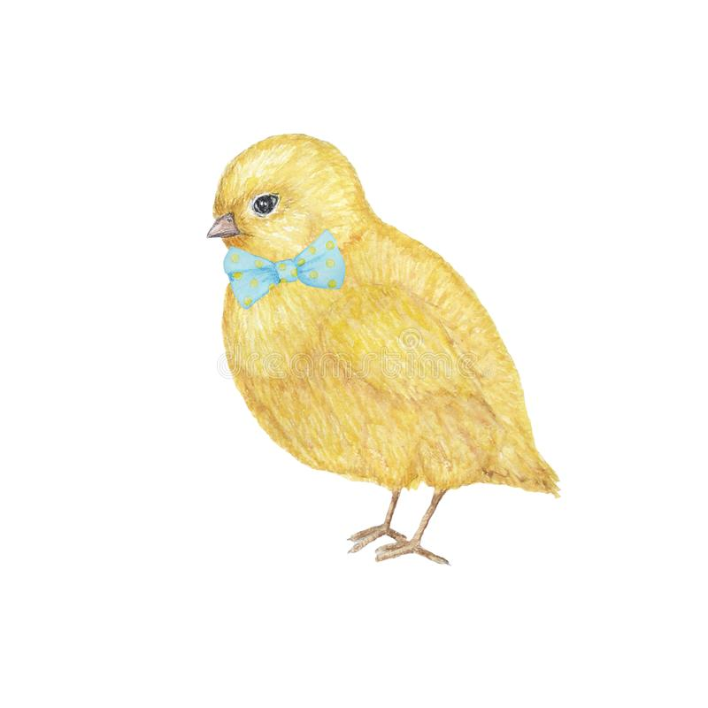 Watercolor hand drawn yellow chiken gentleman with bow. Colorful easter bird on white background. Cute illustration with royalty free illustration