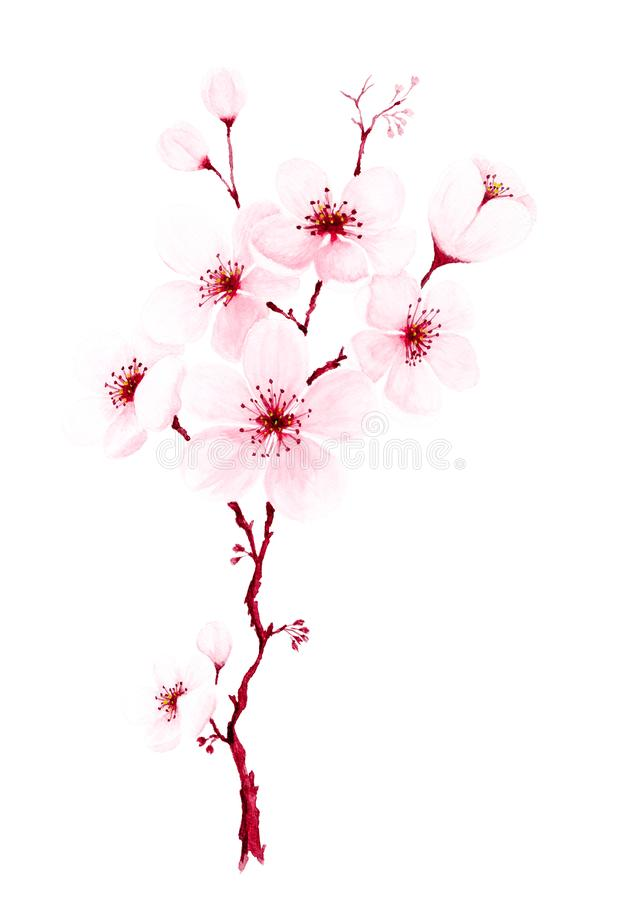 Watercolor hand painted cherry blossom branches stock illustration