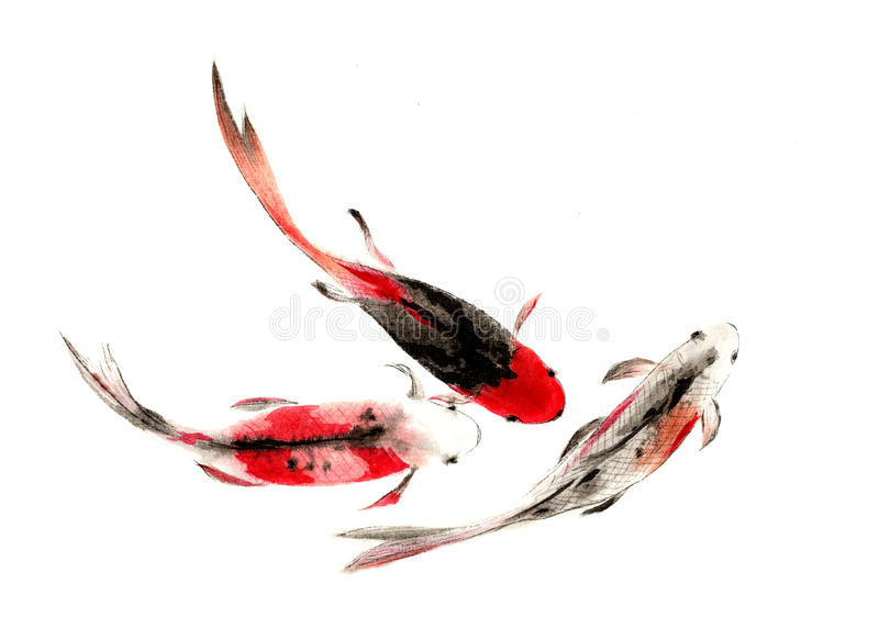 Watercolor hand painted Chinese carp vector illustration