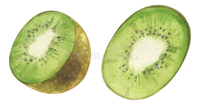 Watercolor hand painted green kiwi Jucy raw exotic Kiwi fruit set. Tropical sweet fresh fruit isolated on white vector illustration