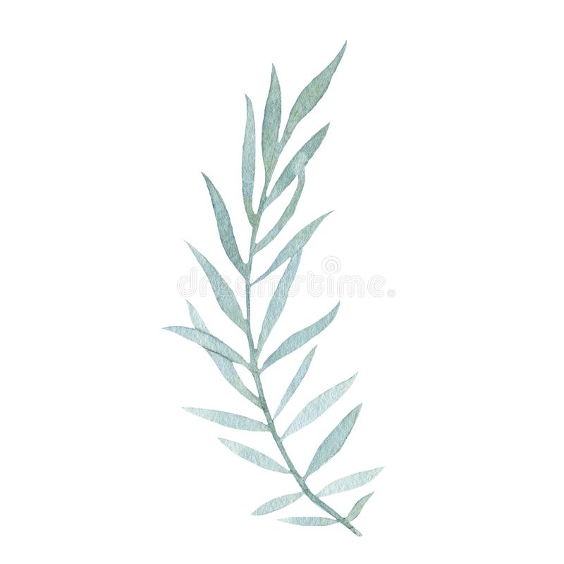 Watercolor hand painted green leaf isolated on white background vector illustration