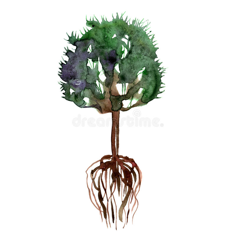 Watercolor hand painted green summer tree and roots vector illustration