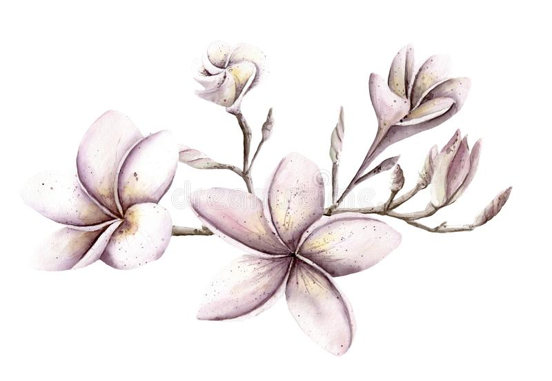Watercolor Hand painted handpaint set of objects. Pink and purple floral flowers frangipani magnolia plumeria tree branch stock illustration