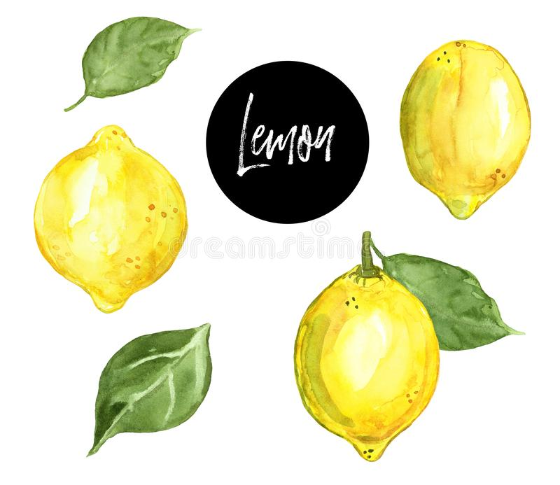 Watercolor hand painted lemon fruits, isolated on white background. Fresh ripe yellow citrus illustration. Summer healthy food. Watercolor illustration of ripe stock illustration