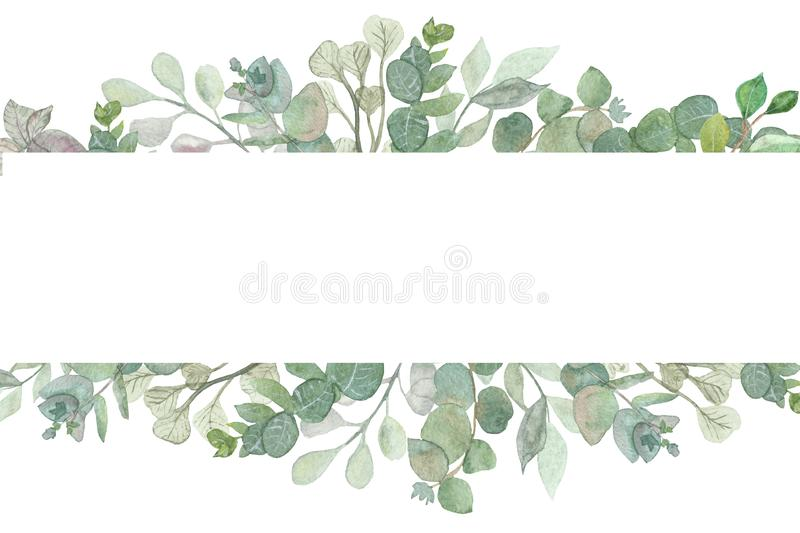 Watercolor hand painted lush banner with silver leaves and branches of eucalyptus dollar. Herbs for wedding invitations, save the date or design welcome. Green stock illustration