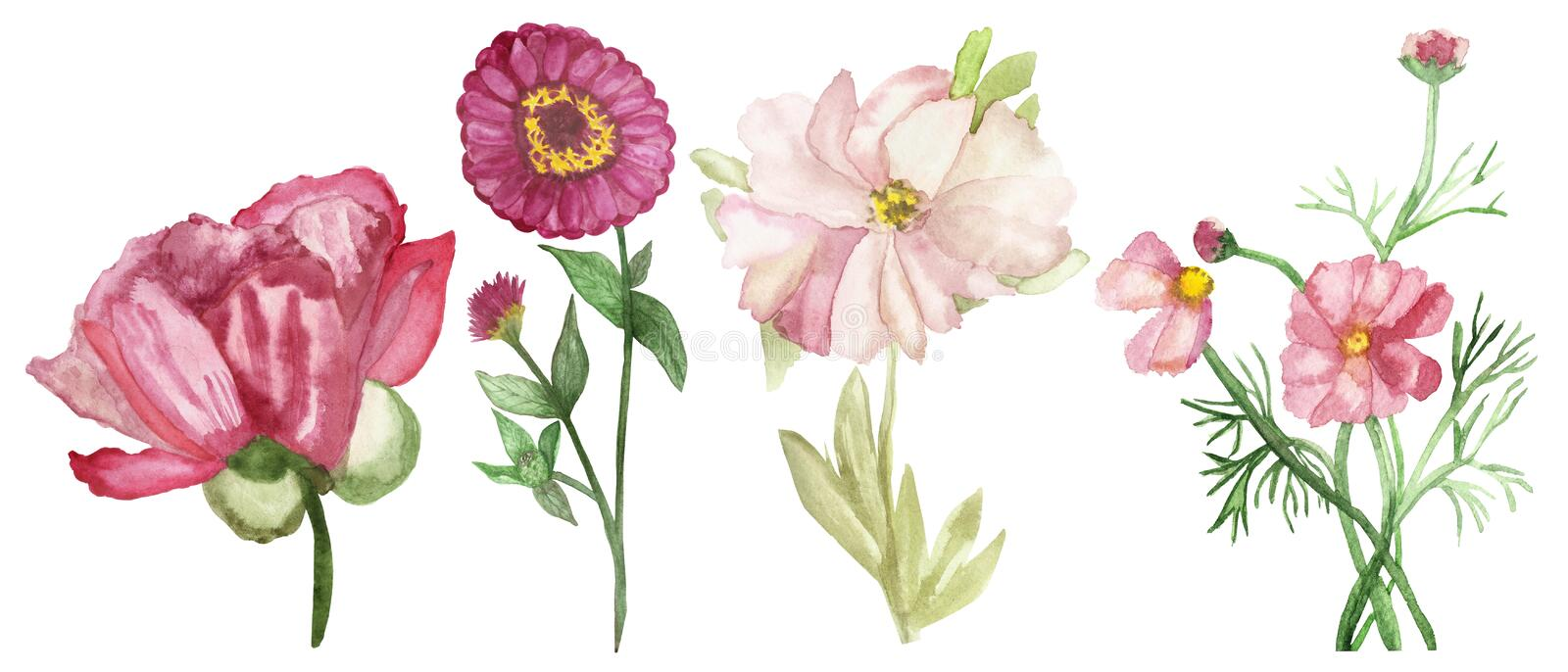 Watercolor hand painted nature romantic floral set composition with different four pion, zinnia and loach flowers stock illustration