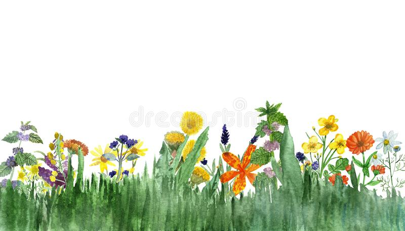 Watercolor hand painted nature set with yellow, orange, purple and blue medicinal flowers and green eucalyptus and herbs branches vector illustration