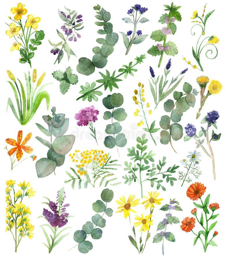 Watercolor hand painted nature set with yellow, orange, purple and blue medicinal flowers and green eucalyptus and herbs branches. And leaves collection royalty free illustration