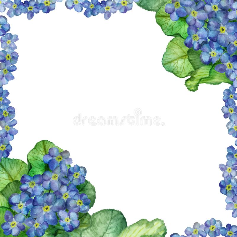 Watercolor hand painted nature square frame with blue forget me flowers and green leaves on branches. For invitations and greeting cards with space for text stock illustration
