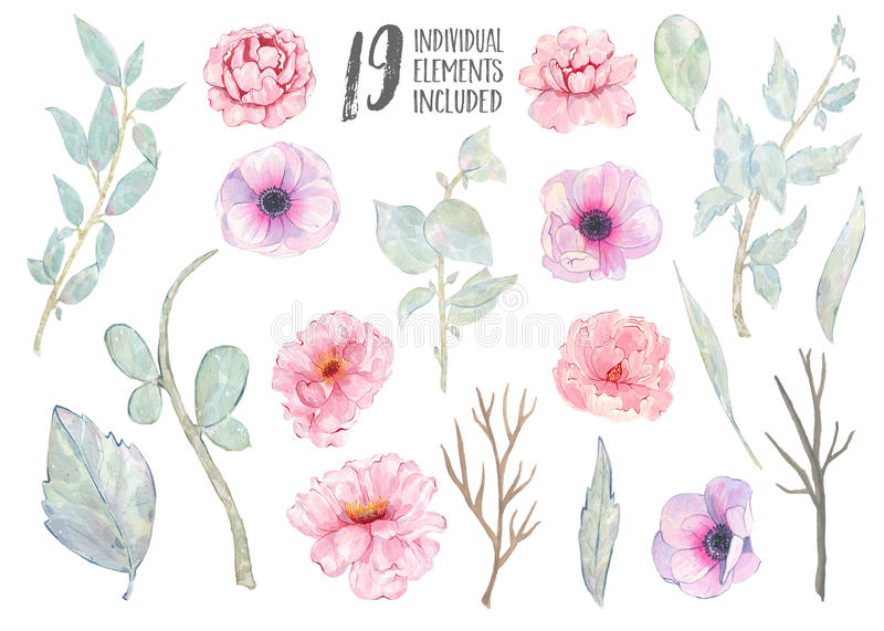 Watercolor hand painted pink anemone peony green leaves branch isolated on white background stock illustration