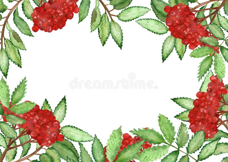 Watercolor hand painted squared border frame with rowan branches, little red berries and green leaves. Nature healthy vegan food illustration for invitations royalty free illustration