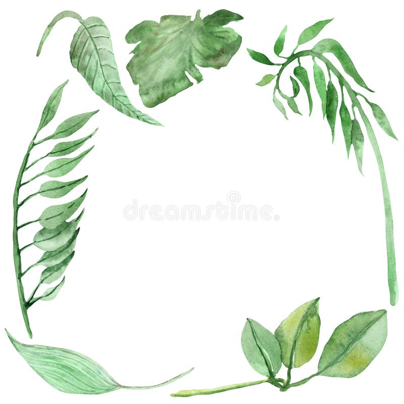 Watercolor hand painted squared border nature flora frame with green tropical leaves and eucalyptus branches. Isolated on the white background for jungle warm stock illustration