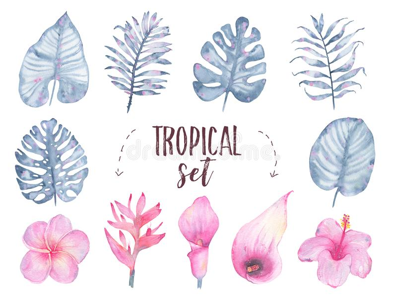 Watercolor hand painted tropical indigo leaf flower frangipani hibiscus calla lily set isolated on white background stock illustration