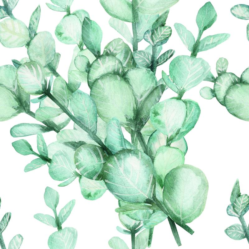Watercolor hand painting of eucalyptus branches with green leaves. Seamless background, spring or summer flowers for invitation, w stock illustration
