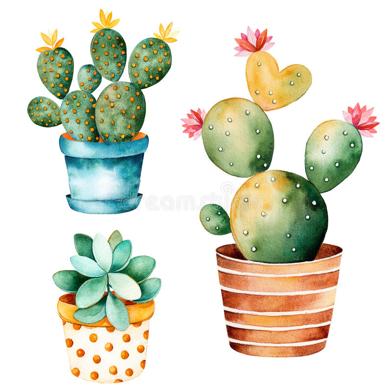Watercolor handpainted cactus plant and succulent plant in pot. vector illustration