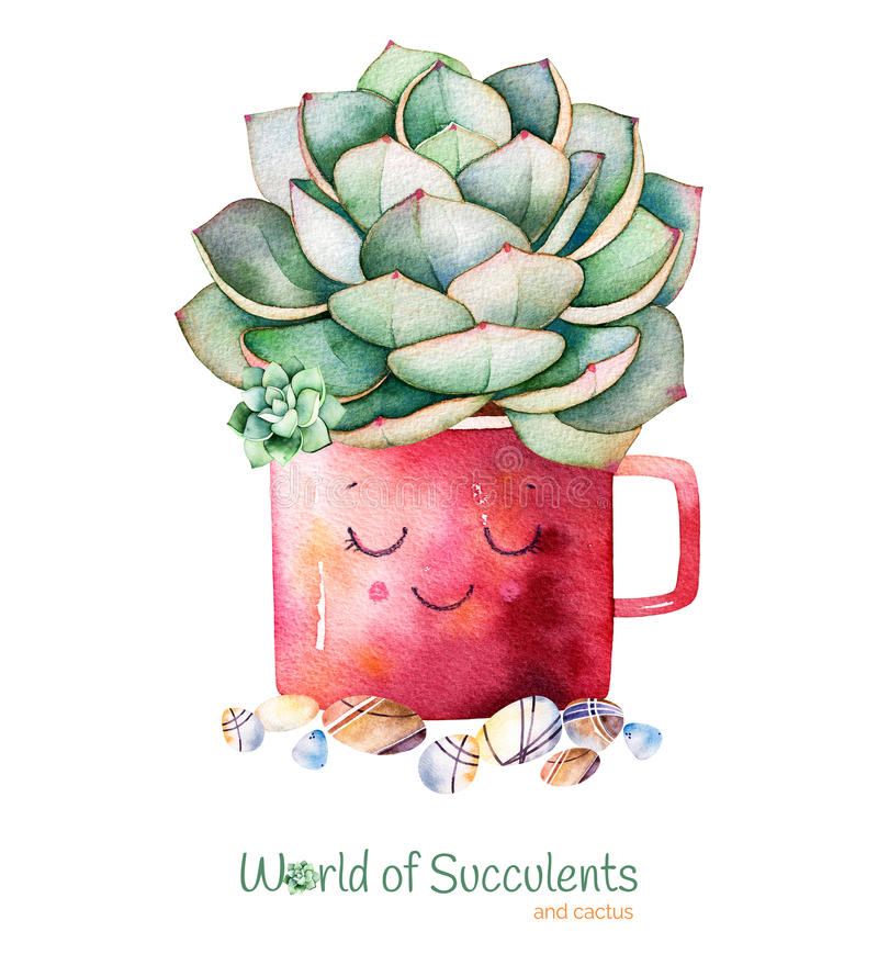 Watercolor handpainted succulent plant in pot and pebble stone. vector illustration