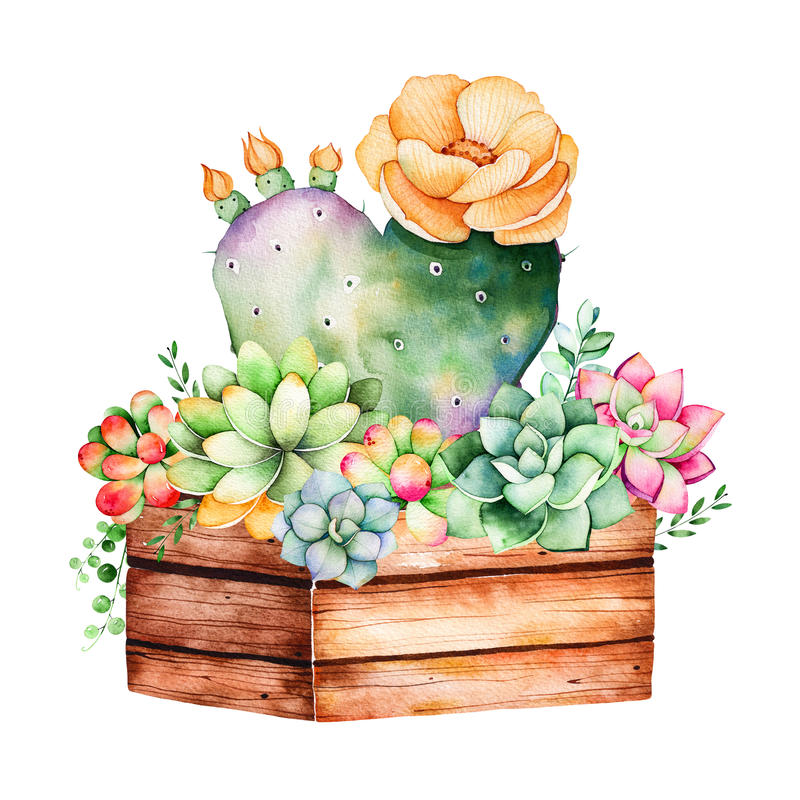 Watercolor handpainted succulent plant in wooden pot and cactus flowering. stock illustration