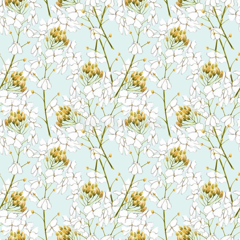 Watercolor horseradish flowers. Seamless pattern. Botanical illustration of organic, eco plant. Illustration For Food. Design royalty free illustration