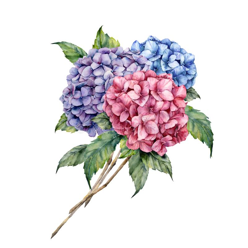 Watercolor hydrangea bouquet. Hand painted pink and violet flowers with leaves isolated on white background for design. Print vector illustration