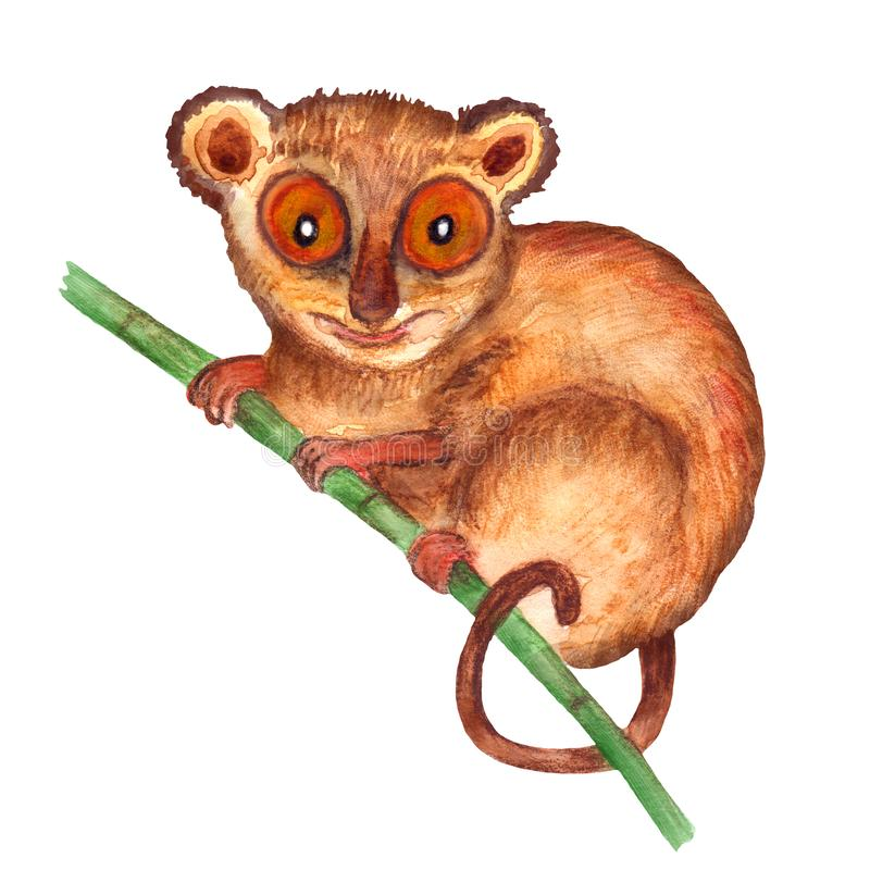 Watercolor hyper-realistic wild animals of Asia - tarsier royalty free illustration