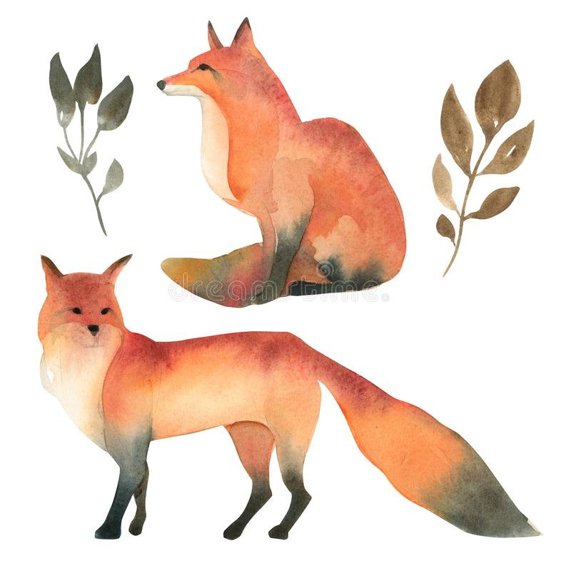 Watercolor illustartion of red wild fox isolate on white background. Realistic forest animal sketch stock illustration