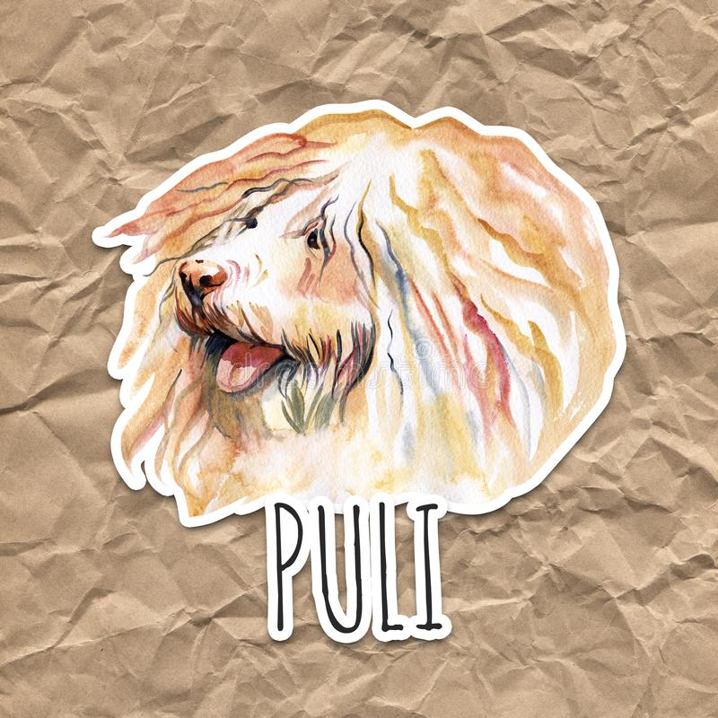 Watercolor Illustrated Portrait of Puli dog. Cute curly face of domestic dog. royalty free stock image