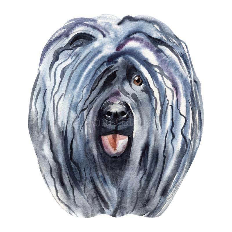 Watercolor Illustrated Portrait of Puli dog. Cute curly face of domestic dog. vector illustration