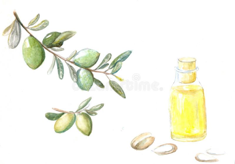 Watercolor illustration of argan brunch, fruits,. Watercolor illustration of argan brunch, fruits and cosmetic oil in the little bottle royalty free illustration