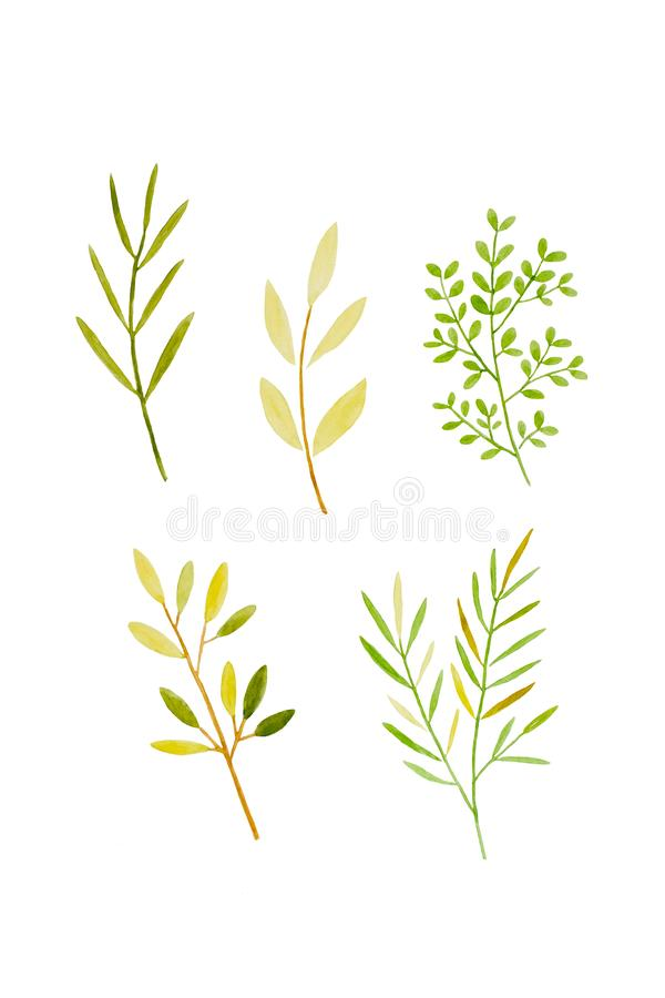 Watercolor illustration art design, Set of spring green tree leaves in watercolor hand pianting style isolated on white background stock photography