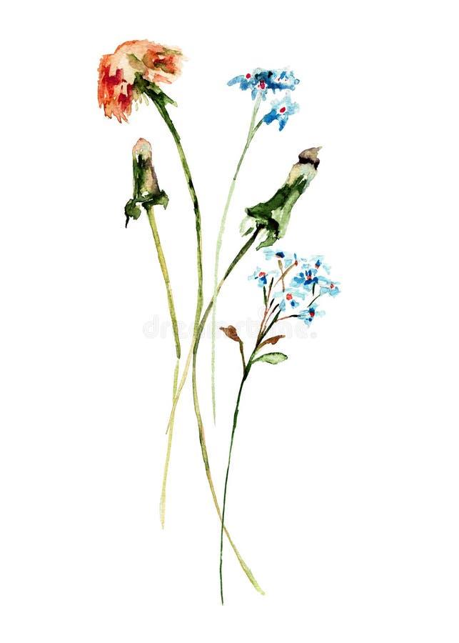 Beautiful wild flowers stock illustration