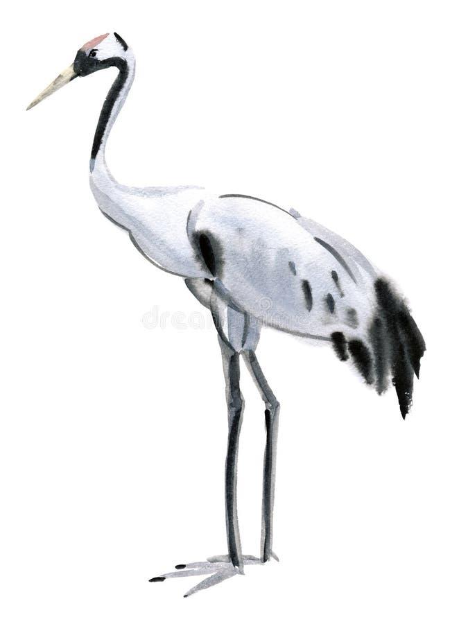 Watercolor illustration of a bird crane royalty free illustration