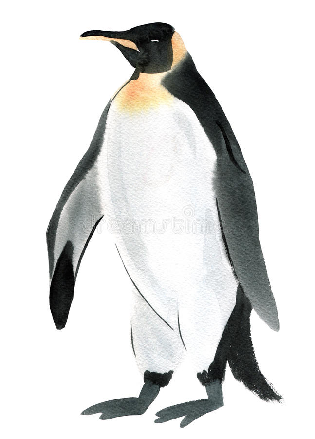 Watercolor illustration of bird penguin in white background. vector illustration